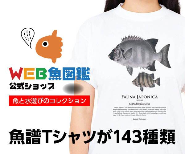 魚譜Tシャツが143種類 - WEB魚図鑑公式ショップ